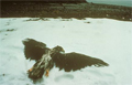 Photos of the Exxon Valdez Oil Spill
