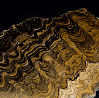 stromatolite fossil