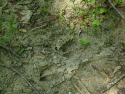 Modern Footprints