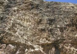Rhizoliths