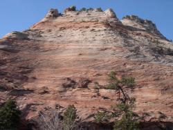 A picture of cross-bedded sandstone in Zion National Park