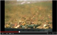Sediment Transport of Gravel