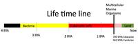 Life timeline image