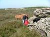 Sarah Dean, Ed Hansen and icelandic poney