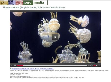 Screenshot Video on Cnidarians