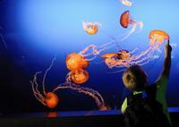 Suzanne and Walter Scott Aquarium