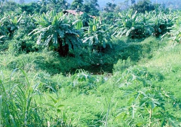Diverse Crops