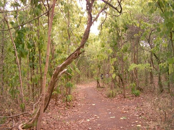 Khao Din's community forest