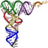 Transfer RNA