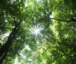 Solar energy in a forest