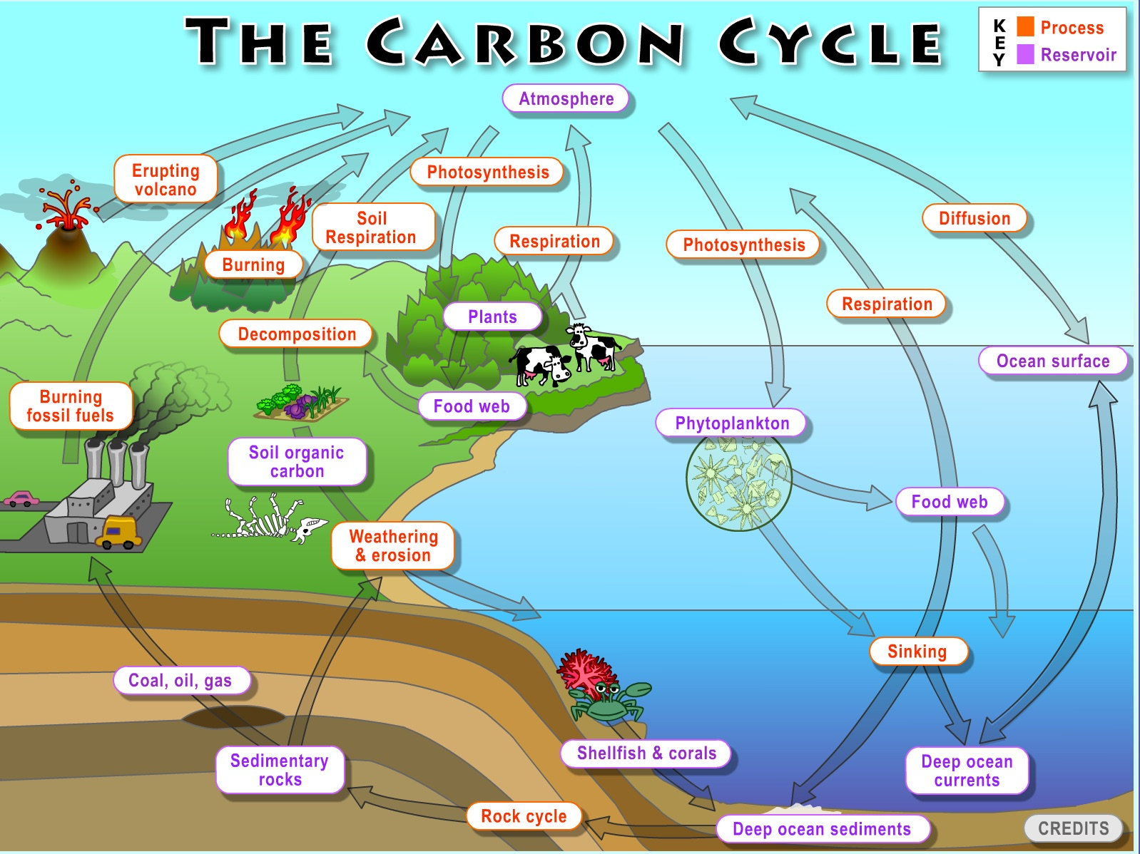 carbon cycle diagram  originally uploaded in clean:teaching climate and  energy:tools for educators:earth systems investigations:carbon cycle