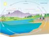 Carbon cycle schematic
