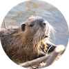 beaver-4814029_640.png