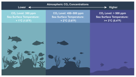 Climate Change Effects on Coral Reefs