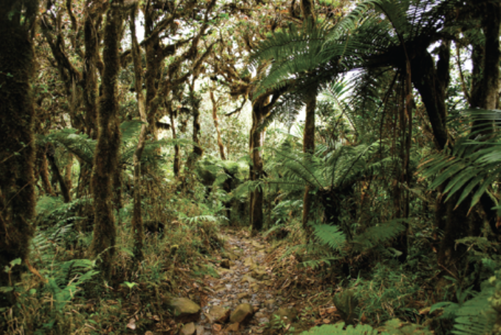 Cloud Forests Are Vulnerable to Climate Change