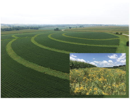 Conservation Practices Reduce Impact of Heavy Rains
