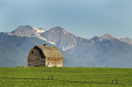 Potato Field in Montana