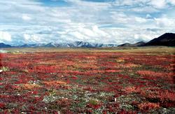 Autumn colors in Alaska