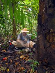 Alexander Barron at work in the rainforest