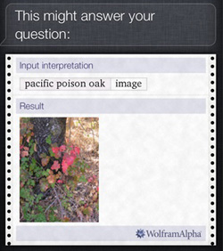 "Screen shot from actual iPod asked \'What does poison oak look like?""  Credit: Dale Chayes"