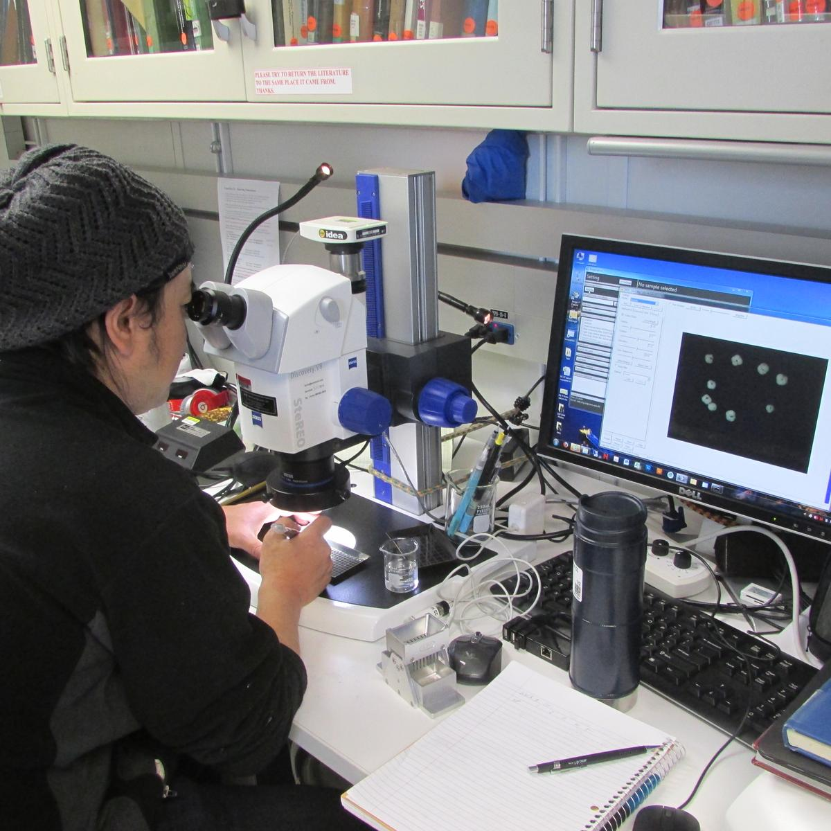 Dr. Hiro Asahi examines a smear slide in the micropaleontology lab.