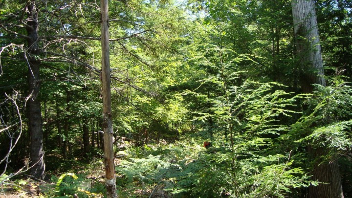 In What's Your Woods Trees For The Forest Seeing