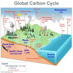 Global_Carbon_Cycle