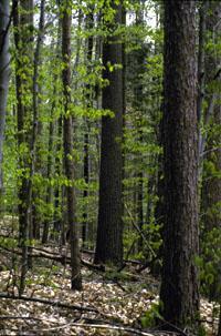 VtForest