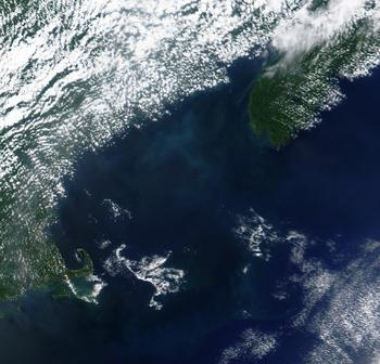 phytoplankton blom in Gulf of Maine