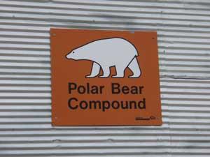 polar bear compound in churchill