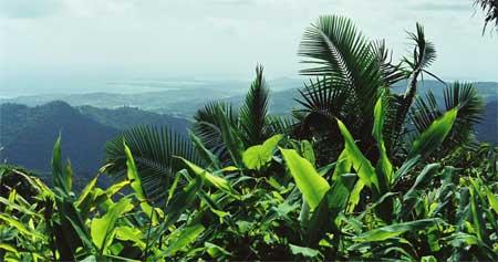 rainforest vista