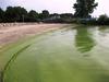 Lake Erie Phytoplankton Bloom