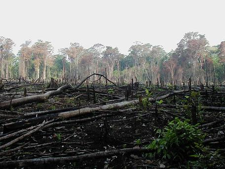 DEFORESTATION IN MEXICO  IMAGE