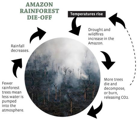 A Feedback Loop Affecting the Amazon Rainforest