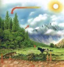 Forest and Meadow Carbon Cycle