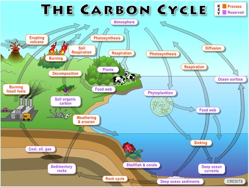 lab 2  the global carbon cycle