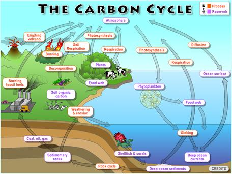 Climate and the carbon cycle unit overview the global carbon cycle ccuart Gallery