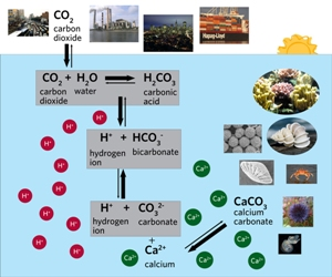 The Ocean Carbonate System