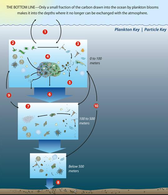 Biological Carbon Pump:WHOI