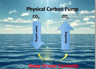 Physical carbon pump