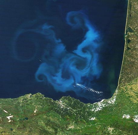 Phytoplankton bloom Key of Biscaye france