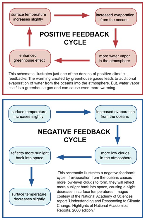 Positive And Negative Feedbacks