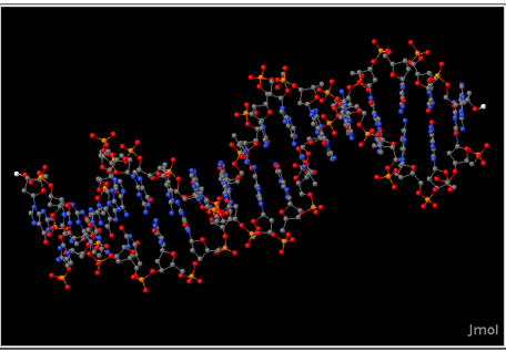 Short segment of DNA molecule