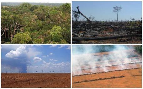Stages of deforestation