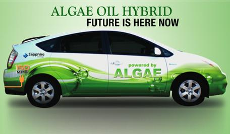 Toyota algae car