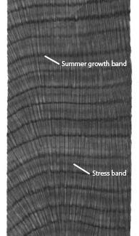 Coral Core Bands
