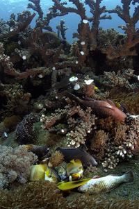 Coral Reef Blast Damage