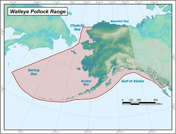 Alaskan Pollock or Walleye Range