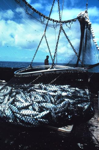 the main threats to our ocean fisheries Oceans issues & threats facebook without proper protection, overfishing, bycatch, pollution, and other issues have become major threats to the health of our oceans.