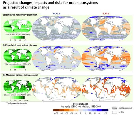 IPCC Projecte Changes and Risks for Ocean Ecosystems
